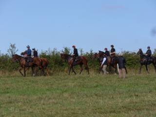 Horses return from the gallops r.jpg