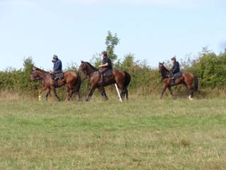 Horses return from the gallops 2 r.jpg